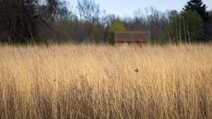 Joseph Steinen Wildlife Area