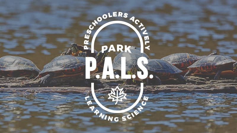 Park P.A.L.S. | Turtley Awesome!