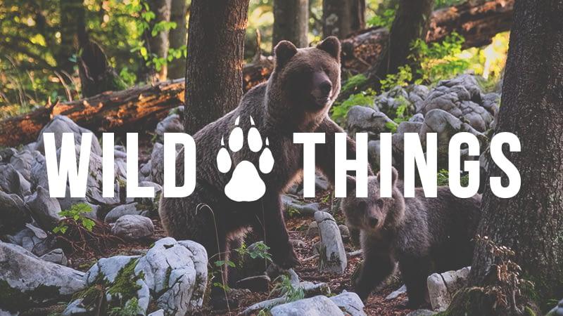 Wild Things | Hi-BEAR-nation!